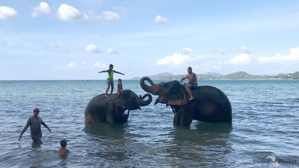 海沿いで象水遊び