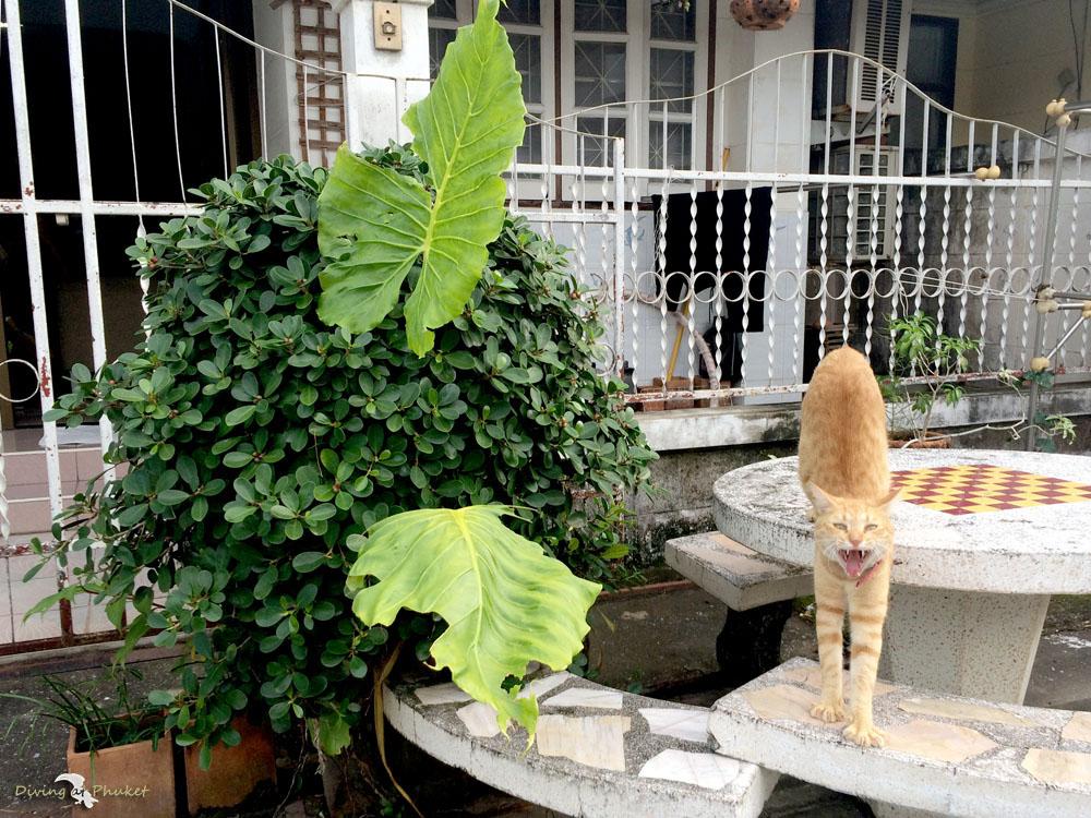 プーケット 猫